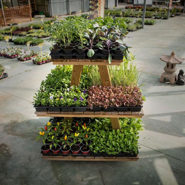 expositor plantas y plantel
